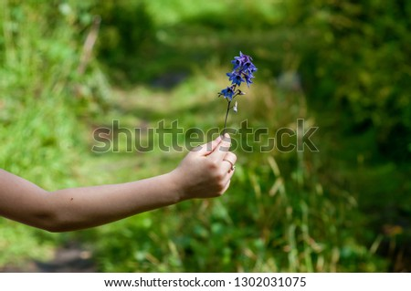 Little girl holding the blue Delphinium (Blue Mountain Larkspur, Dwarf Larkspur, Slim Larkspur) inflorescence in her hand. Shallow depth of field #1302031075