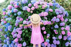Little girl hugging big hydrangea bushes in garden. Pink, blue, lilac Flowers blooming in spring and summer. Kid wearing in pink dress, straw hat. Romantic concept of childhood, tenderness.