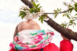 Little girl in a bright scarf sniffs a flowering tree. The child sniffs flowers on a tree on a background of the sky