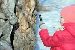 Little girl in warm winter clothes with a magnifying glass in her hand investigate unusual twisted tree trunk. Winter outdoor kids activity and learning concept