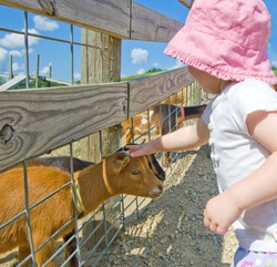 Little girl in white shirt and pink bucket hat petting a baby goat through a wooden fence on a farm with green hills beneath a bright blue sky with puffy white clouds. Photo shot in Southern Wisconsin