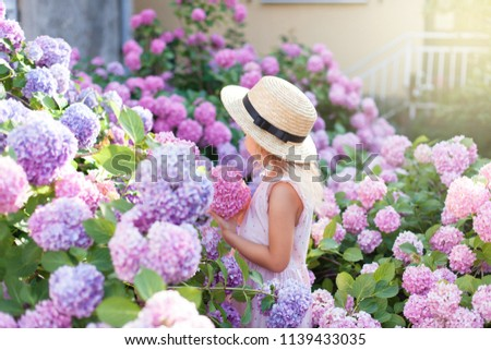 Little girl is in bushes of hydrangea flowers in sunset garden. Flowers are pink, lilac, blue, lavender and blooming in town streets. Kid is in pink dress, straw hat. Concept of childhood, tenderness.
