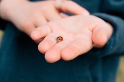 Little girl, little hand holding a ladybug