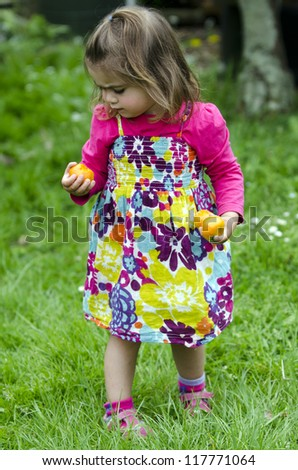 Little girl looks at mandarin fruits at the farm. Concept photo of child, children, childhood, outdoor, food, farm , family, travel, vacation, experience.
