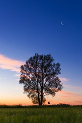 Little girl on swing under big tree in sunset
