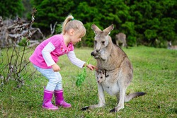 Little girl playing with Kangaroo at zoo