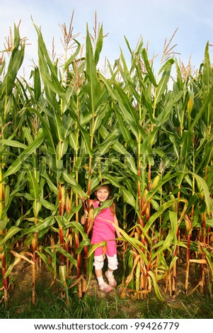 Little girl plays hide and seek in an cornfield