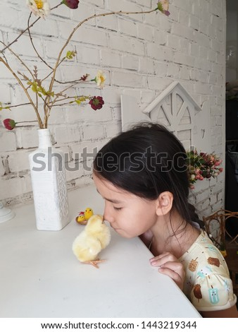 little girl watching and playing with a little yellow chicken #1443219344