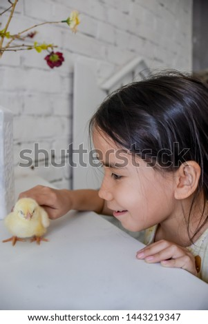 little girl watching and playing with a little yellow chicken #1443219347