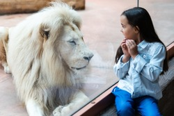 Little Girl Watching Through the Glass at White Lion in Zoo. Activity Learning for Kid.