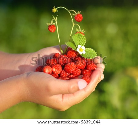 Little girl with a hand full of wild strawberries