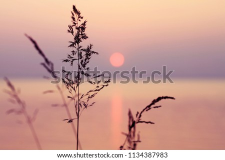 Little grass stem close-up with sunset over calm sea, sun going down over horizon. Pink & purple pastel watercolor soft tones. Beautiful nature background.