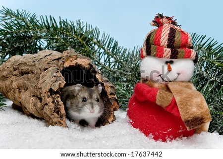 Little gray hamster in snow at christmas