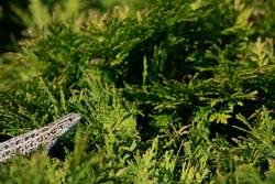 little gray lizard on a green plant