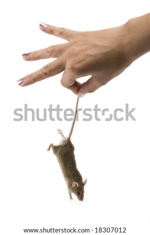 Little gray mouse is hold by beauty hand.