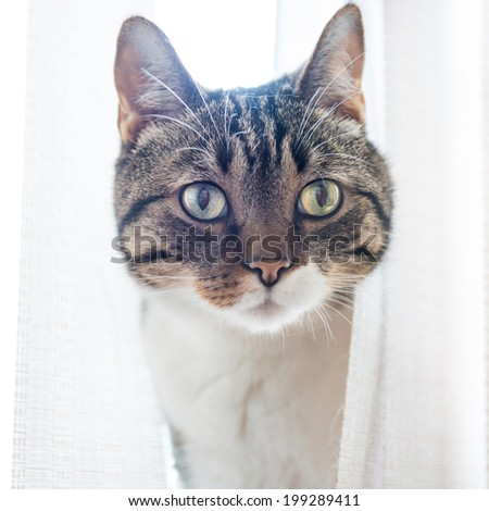 Little gray striped and curiously looking cat isolated on white background