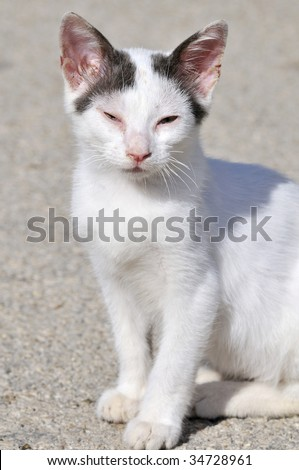 Little Greek cat suffering from a disease at the eyes