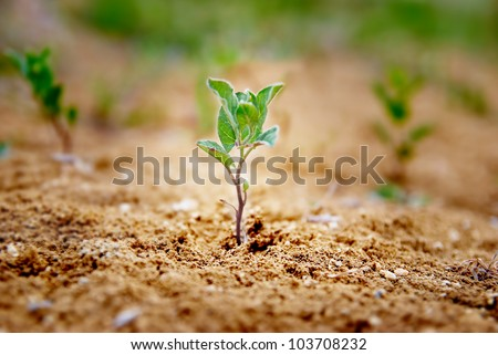 Little green plant growing in the desert. Environmental concept.