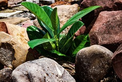 Little green plant growing on a rock filed, abstract meaning of growing among obstacle, people success