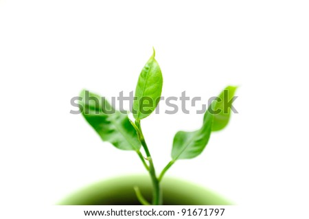 Little Green Plant in Pot on White Background