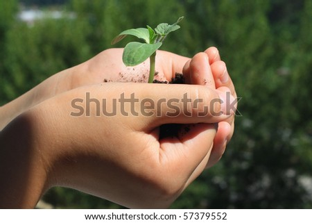 little green sprout in the children's hands