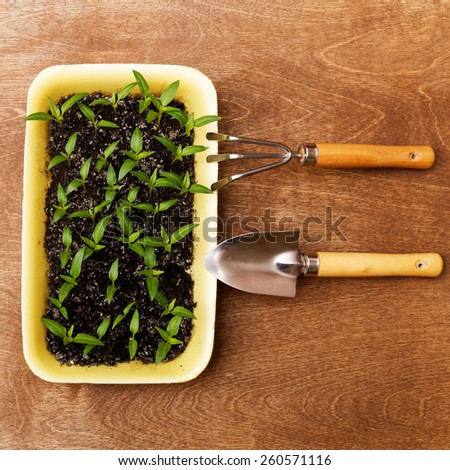 Little Green Sprouts and Small Gardening Tools  on Woody Background