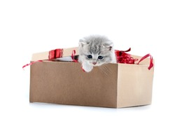 Little grey adorable kitten looking out of decorated birthday box being a cute present for someone. Small gray funny charming kittycat amusing playful fluffy kittycat cuteness happiness valentine