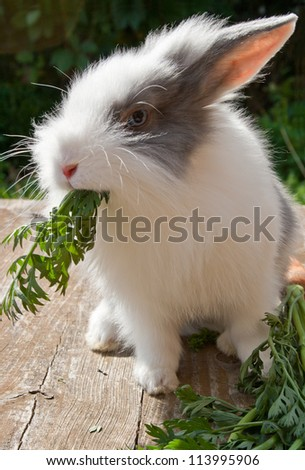 little grey and white rabbit rabbit pet
