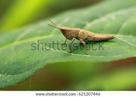 Little guy on top of the leaf #621207446