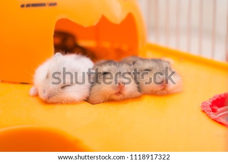 little hamster in the cage