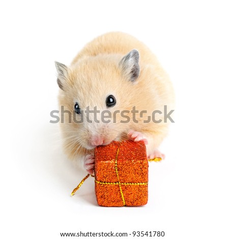 Little hamster with present isolated on white