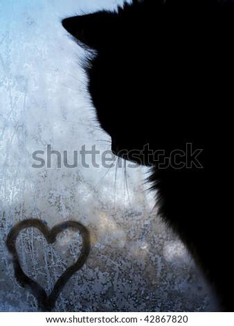 Little heart and little cat on frosty window