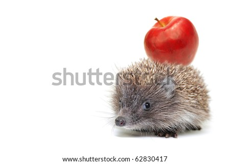 Little hedgehog with an apple on a white background