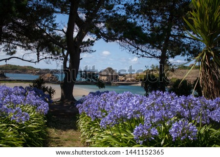 Little house in the Brehat island with agapanthus Stock fotó ©