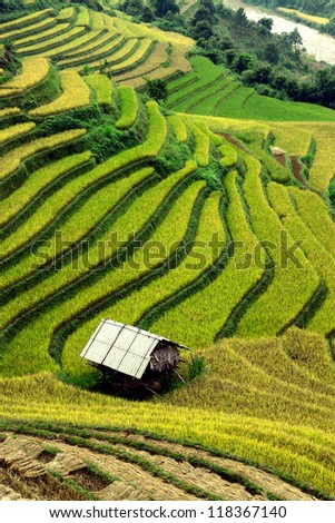 Little house in the rice fields of gold