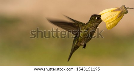 Little hummingbird interacting with a flower