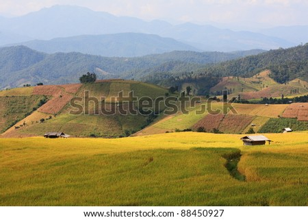 little hut in shade with rice paddy, Thailand