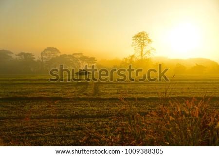 little hut in the paddy field #1009388305