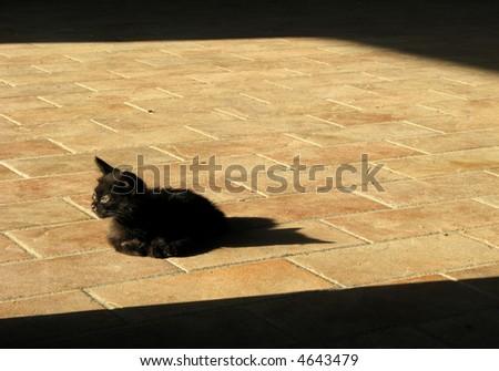 Little Ill Cat