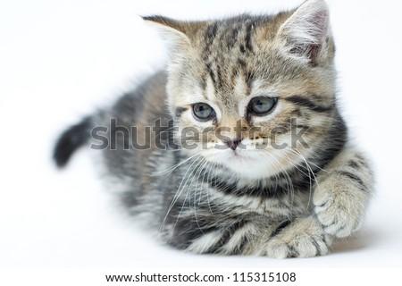 little  kitten