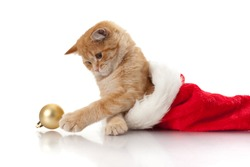 Little kitten and headdress of santa claus on a white background.