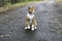 little kitten explorer on the forest road