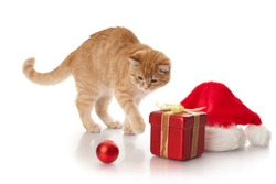 Little kitten, gift box and headdress of santa claus on a white background.