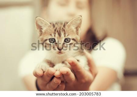 Little kitten held in hands, vintage toned.