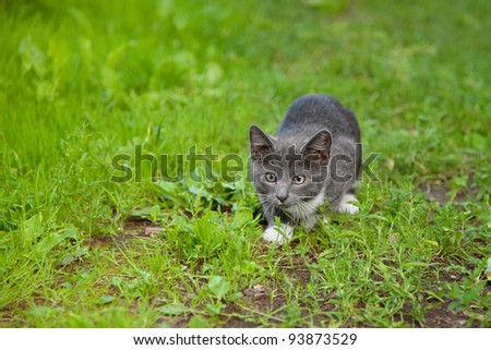 Little kitten hiding in grass