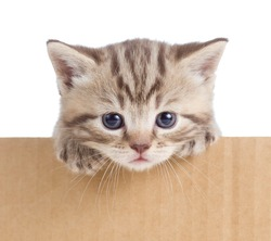 little kitten in cardboard box