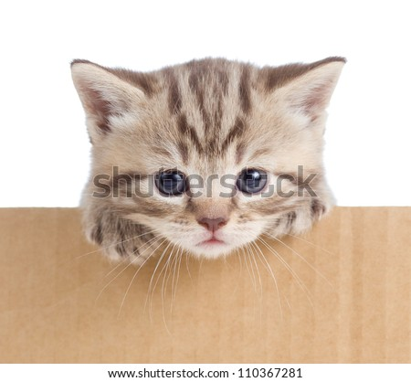 little kitten in cardboard box - stock photo