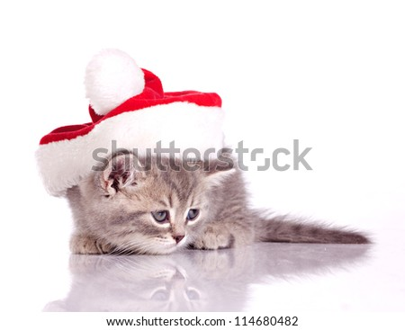 little kitten in costume of santa claus isolated on white
