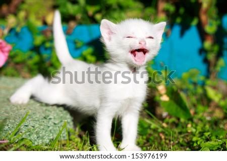 little kitten in nature