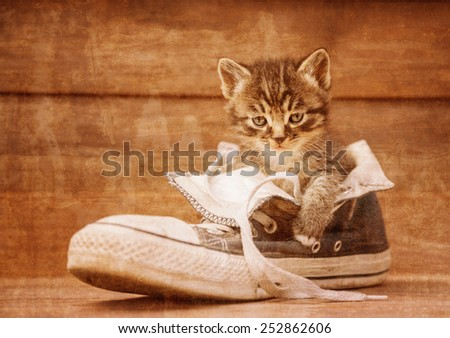 Little kitten is sitting in a shoe on a wooden background. Vintage image